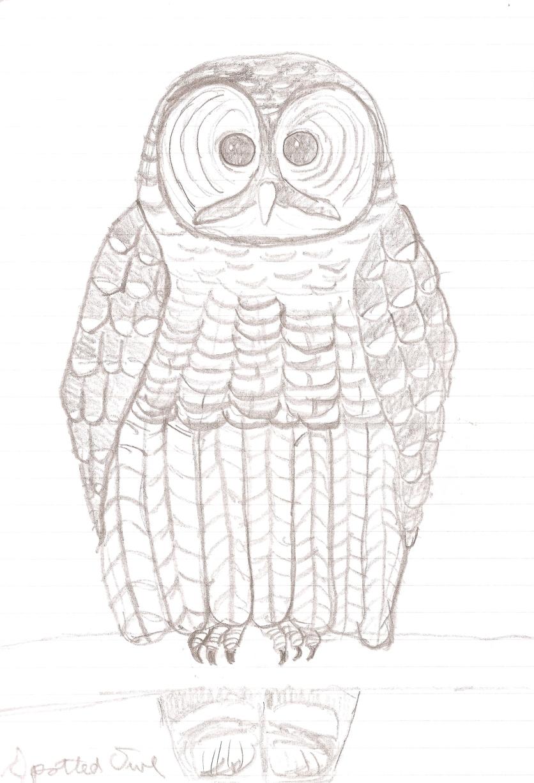 2010 Doodles